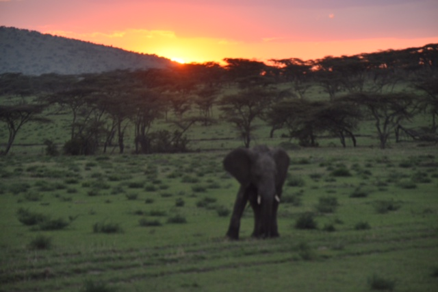 Sunset in the Northern Serengeti