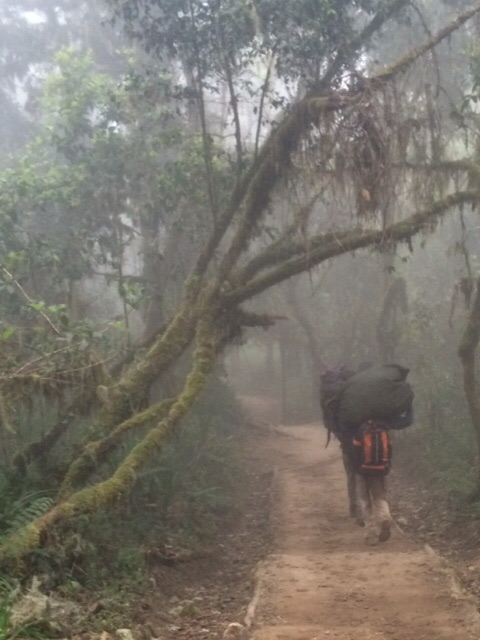 Porters on the Trail