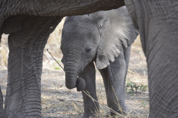 A Cute Baby - Lake Manyara (Photo by Fima)