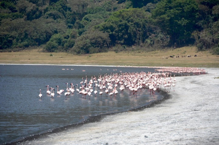 A large flock