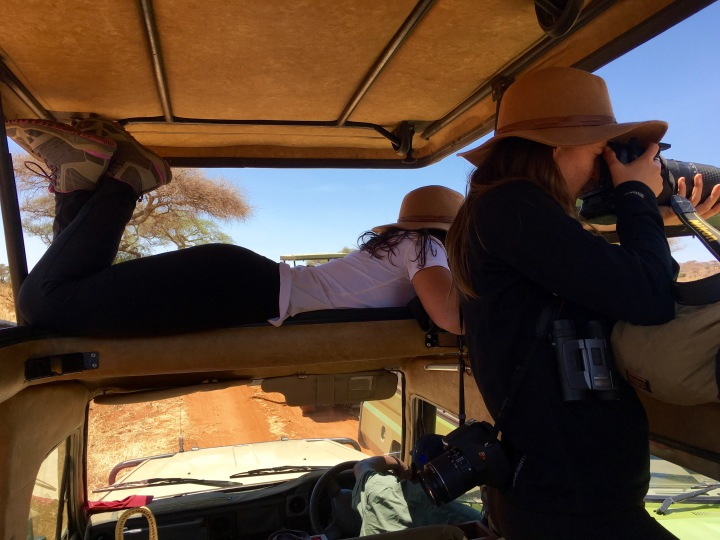 Kelley and Laurita getting shots of the cheetahs
