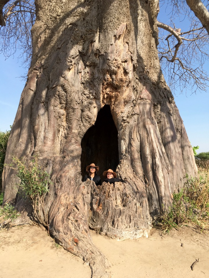 Smuggler's hide - a hollow Baobob tree