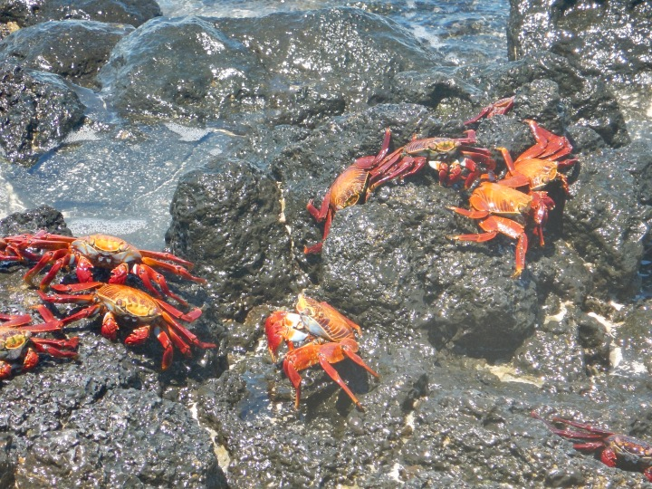 Some of the native crabs