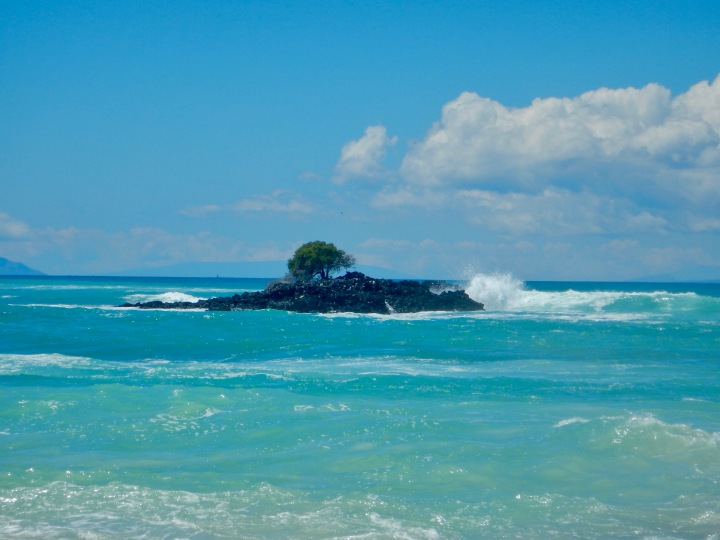 A solitary tree off the beach on Isla Santa Cruz