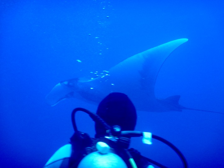 Manta ray up close and personal