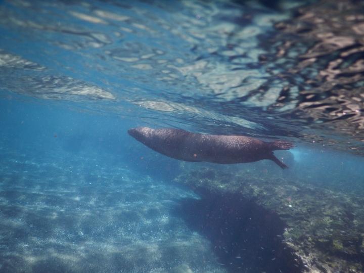A resting sea lion