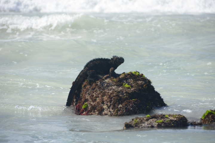 A resting Godzilla