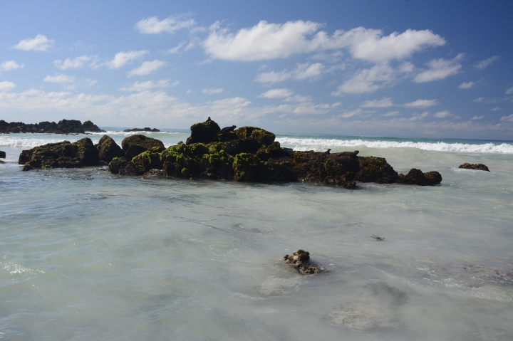Iguana rock